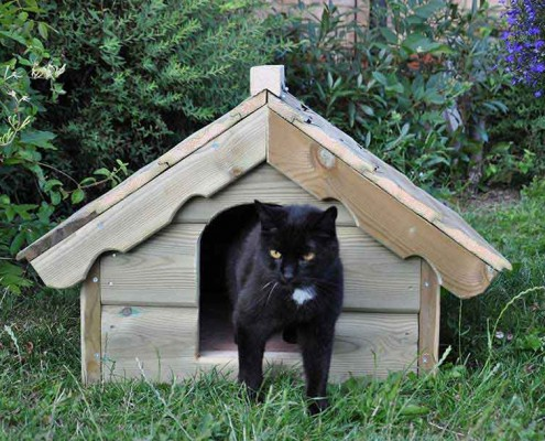 cat-house-001